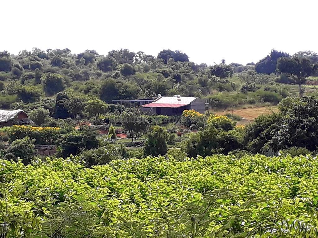 Agricultural Plot for Resale in Banashankari 2nd Stage, Bangalore - 1 Acres  - 6211927