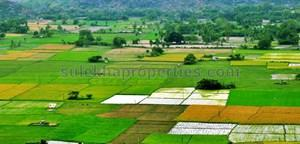 agricultural land in panvel farmland for sale in panvel agricultural rh property sulekha com