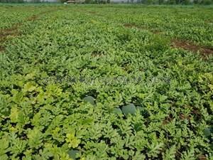 Agricultural Land in Mumbai, Farm Land For Sale | Sulekha Mumbai