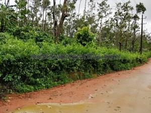 1 lakh-60 lakhs Property in Sakleshpur|1 lakh to 60 lakhs Property