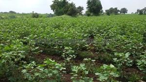 11 lakhs-20 lakhs- Agricultural Land in Hyderabad 11 lakhs-20 lakhs