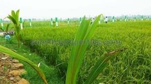 5 lakhs to 10 lakhs - Agricultural Land, Farmland for Sale