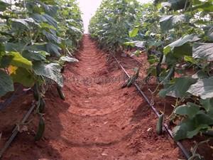 1 lakh-10 lakhs- Agricultural Land in Hyderabad 1 lakh-10 lakhs