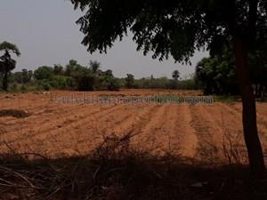 1 lakh-40 lakhs- Agricultural Land in Chennai 1 lakh-40 lakhs- Farm