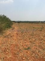 Agricultural Land in Bangalore|FarmLand for Sale in Bangalore