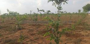 1 lakh-10 lakhs- Agricultural Land in Hyderabad|1 lakh-10 lakhs