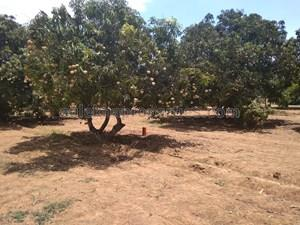 1 lakh-40 lakhs- Agricultural Land in Chennai|1 lakh-40 lakhs- Farm