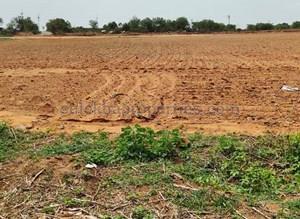 Agricultural Land in Kothur, Mahbubnagar, Farm Land For Sale