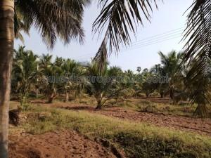 1 crore to 2 crores- Agricultural Land, Farmland for Sale | Sulekha