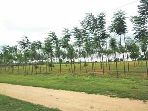 Agricultural Land in Bangalore Highway NH 7|FarmLand for Sale in