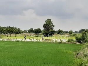 Agricultural Land in Kanchipuram, Farm Land For Sale